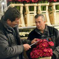 Kwaliteitscontrole snijbloemen